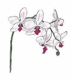 Orchid (Orchis): Refined Beauty. The Victorians were in thrall to the orchid: everyone wanted to possess a little of its elegant and exotic beauty. An orchid worn in the hair, an arrangement in a vase, an entire orchid house even - the flower never failed to impress, not least because it was so costly to buy. #LanguageOfFlowers