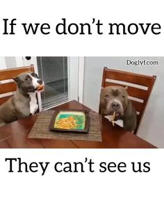 Source by dog dog memes dog videos videos wallpaper dog memes dog quotes dogs dogs pictures dogs videos puppies puppy video Funny Dog Videos, Funny Animal Memes, Dog Memes, Cute Funny Animals, Funny Animal Pictures, Cute Baby Animals, Funny Cute, Funny Dogs, Animal Humor