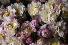 Luscious Peonies look like a delicate floral dessert. From the hungry ghost food + travel
