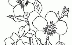Latest Printable Coloring Pages Of Flowers Ideas