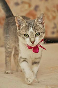 So sweet :) Love the bow tie :)