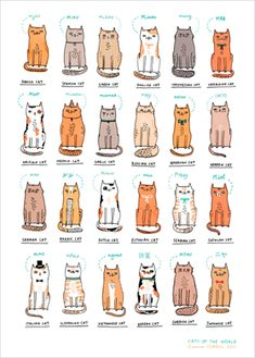 Cats of the World by Correll Gemma via L'Affiche Moderne-for my husband. I Love Cats, Cute Cats, Funny Cats, Baby Cats, Cats And Kittens, Art And Illustration, Illustrations, Animal Gato, Gatos Cats