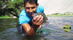 Pesca de Tilapias y Camarones con atarraya en Rio