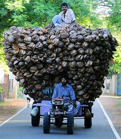 Sri Lankan Tamil farmers transport coconut husk in Jaffna, 250 miles north of the capital Colombo on Nov. 18, 2013.