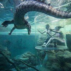 Crocosaurus Cove - Darwin, AUSTRALIA