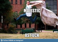Majestic as f**k! // work it dude, find the angles, find the light, pose pose pose!