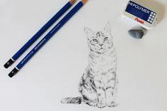 Drawing a Cat Tutorial