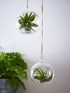 NEW Air Plant Ornament - Decorative Accessories - Decorative Home - Indoor Living