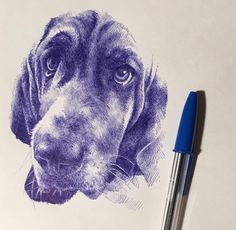 Puppy from with Bic pen on Canson paper. Biro Art, Ballpoint Pen Art, Ballpoint Pen Drawing, Art Drawings Sketches Simple, Ink Pen Drawings, Animal Drawings, Hatch Drawing, Stylo Art, Pen Illustration