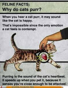 Best Of Fake Science I love cats - but still this is funny.I love cats - but still this is funny. Why Do Cats Purr, Hate Cats, I Love Cats, Cats And Kittens, Dumb Cats, Crazy Cat Lady, Crazy Cats, Funny Cats, Funny Animals