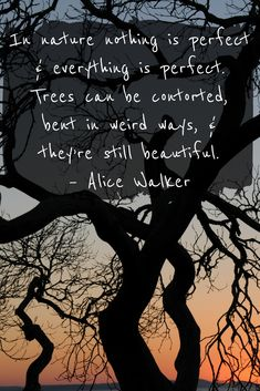 In nature nothing is perfect & everything is perfect. Trees can be contorted, bent in weird ways, & the're still beautiful. Alice Walker Quote. Nature Quotes. #Nature #NatureQuotes #Trees #AliceWalker #Quotes
