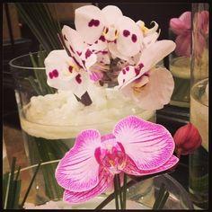 #Flowers #Pink #Purple