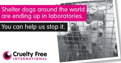 Lost, stray and abandoned dogs are being handed over to laboratories around the world for use in experiments.    And many of these poor animals are also being supplied to human and veterinary medical schools, including for students to develop and practice their surgical skills.  Sign the petition to help save them now