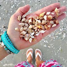 It's like seeing old friends after months. Minis!! #wentletraps #seashells  #pitterpatter #sanibel #beachcombing #happyheart