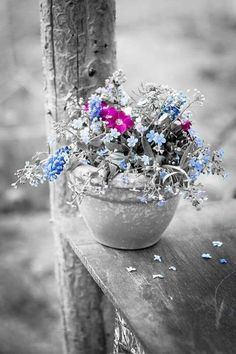 splash of color Splash Photography, Color Photography, Black And White Photography, Nature Photography, Black And White Colour, Black And White Pictures, Flowers Nature, Love Flowers, One Color