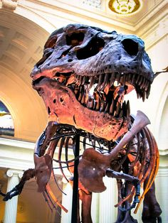 """""""Sue"""", the T-Rex at the Field Museum, Chicago, by Sue Scimeca"""