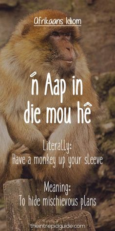 Afrikaans is one one of the easiest languages to learn and make you laugh. Translating Afrikaans to English, these Afrikaans idioms will make you giggle. Some Quotes, Best Quotes, Funny Quotes, Unique Words, Cool Words, Afrikaans Language, Collective Nouns, Afrikaanse Quotes, Teachers Aide