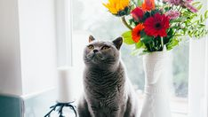 Russian blue cat standing near ceramic vase with artificial flowers Beautiful, free Rose photos from the world for everyone - Infinity Collections First Time Cat Owner, Chartreux Cat, Cat Stands, Image Originale, Cat Character, Russian Blue, Blue Cats, Image Hd, Image Link