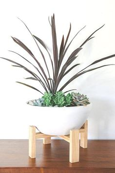 Aster Plant Stand