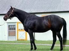 Secretariat's dad Bold Ruler