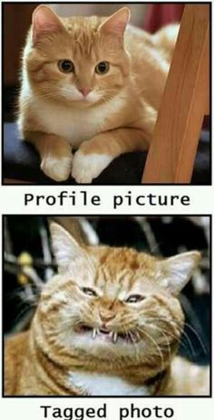 Profile pic vs tagged photo. Cats. Cat