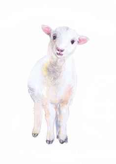 Baby Sheep Painting Lamb Art Watercolor Farm Nursery Decor Print Boy Girl Wall art Animal Portrait Gift ideas Animals Prints Watercolour  high quality fine art print of my original watercolor painting. It is the work of a watercolor series Portraits of the Heart    Size paper: 14,8 × 21cm,5 4/5 × 8 1/4, A5 (with white borders) - 8.00 $  21 cm x 29,7 cm, 8 1/4 x 11.5/8, A4.(with white borders) - 18.00 $  29,7cm × 42cm, 11,69 × 16,54, A3(with white borders) - 36.00 $    Othe...
