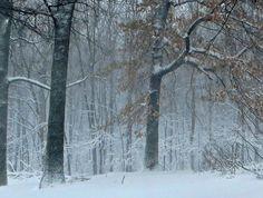 Woods at home - 26 Dec 2012