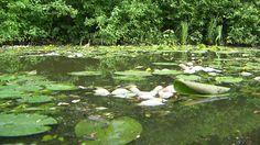Fischsterben wegen Hitze