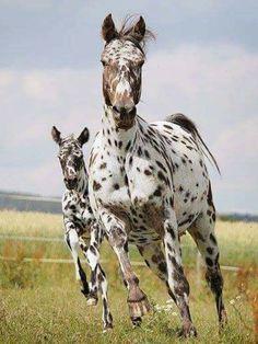 #HORSE##CUT##ANIMALS#