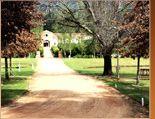 Waterford Estate in Stellenbosch Wineries, South Africa, Sidewalk, Plants, Beautiful, Wine Cellars, Sidewalks, Plant, Pavement