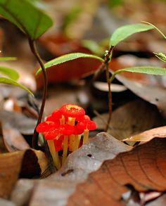 Fungi by budsk, via Flickr