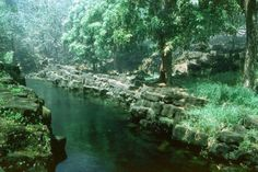 """""""Queens Bath"""" One of the many sacred fresh water springs on the Big Island of Hawaii, where the Queens once bathe. Hence the name"""