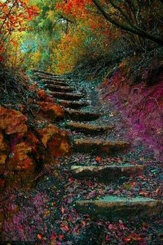 Ideas for pretty nature pictures pathways Stairway To Heaven, Beautiful World, Beautiful Places, Beautiful Stairs, Beautiful Forest, Amazing Places, Beautiful Scenery, Beautiful Artwork, Wonderful Places