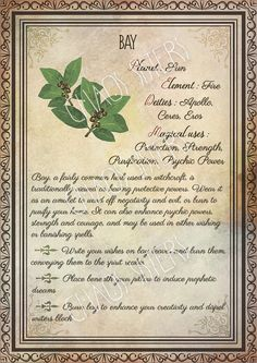 Printable Herbs Book of Shadows Pages Set Herbs & Plants Correspondence, Grimoire Pages, Witchcraft, Wicca, Printable BOS Printable Herbs Book of Shadows Pages Set 1 Herbs & Plants Wicca Herbs, Witchcraft Herbs, Witchcraft Spell Books, Green Witchcraft, Magick Book, Magick Spells, Magic Herbs, Herbal Magic, Traditional Witchcraft