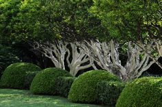 Advice on everything gardening Formal Garden Design, Garden Landscape Design, Garden Landscaping, Outdoor Plants, Outdoor Gardens, Beautiful Landscapes, Beautiful Gardens, La Croix Valmer, Provence Garden