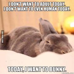 I dont want to adult today - animal meme - http://jokideo.com/i-dont-want-to-adult-today-animal-meme/