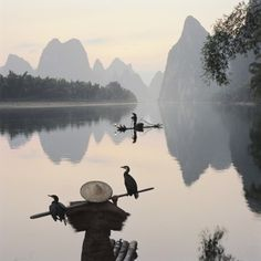 Cormorant fishermen in Li River Photographic Print by Martin Puddy at AllPosters.com