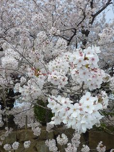 http://ana-rosa.tumblr.com/post/89178164428