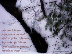 AnExtraordinaryDay.net | Scripture photo | Wintry Scene of evergreen & berries & stream | John 1:11-12 GW