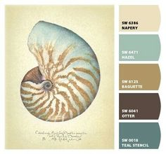 Color.shell