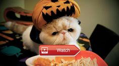 Cute Cats and Dogs Love Halloween  Cute Cats and Dogs Love Halloween  on Pet Lovers