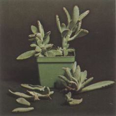 Great article on propogating cactus and succulents