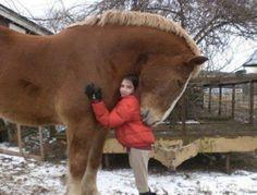 Aww, I want a giant draft horse hug!