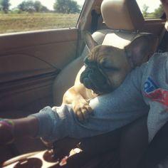 My precious... #FrenchBulldog #CarRide