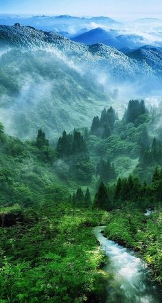 Steamy green mountain view.