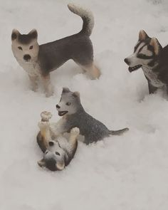 My schleich husky family. These are rare figures that were retired in I love the anatomy of these pups so much. Alaskan Malamute, Marigold, Adele, Anatomy, Husky, Pup, Peace, Stuff To Buy, Dog Baby