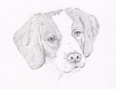 Remember a special dog friend with a Brittany Spaniel Signed Personalized Original Pencil Drawing Double Matted Print. It will have your dogs name