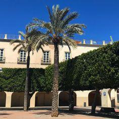 Una poda minuciosa... . . . #palmtree #plazadelaconstitucion #almeria #doyoutravel #travel #adventure #travelgram #travelphotography #travelblogger #travelholic #travellover #worldtraveler #adventurecrew #enamoradosdealmería #rinconesdealmeria #almeriatrending #beautifuldestinations #visitalmeria #explorealmeria #anímate
