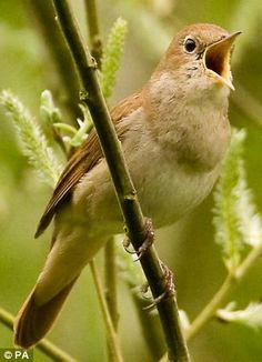 This is fun!!! Tweet of the Day... but its more relaxing than Twitter: Radio 4 to introduce 90-second birdsong recordings each day