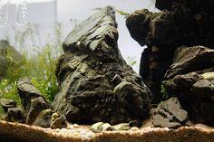Une fois n'est pas coutume, un aquarium,si petit soit-il, est avant tout un véritable échantillon de nature que l'on peut contempler chez soi. Le format carré, la beauté de la pie…